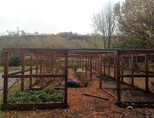 Fruit Tree Planting & Maintenance